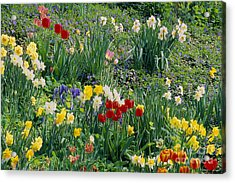 Acrylic Print featuring the photograph Spring Bulb Garden by Alan L Graham