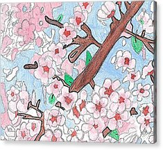 Spring Cherry Blossoms  Acrylic Print by Fred Hanna