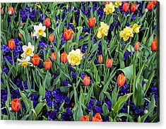 Spring Color Acrylic Print