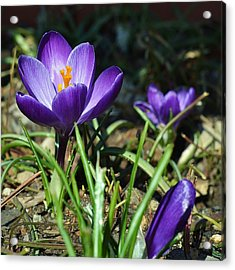Acrylic Print featuring the photograph Spring Comes by Mary Zeman