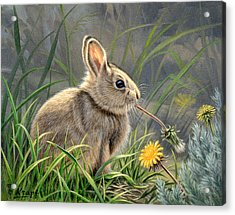 Spring Cottontail Acrylic Print by Paul Krapf