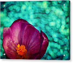 Acrylic Print featuring the photograph Spring Crocus by Peggy Collins