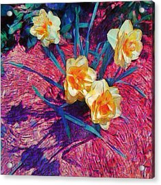 Spring Daffodils On Red - Square Acrylic Print