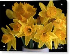 Spring Daffodils Acrylic Print by Tracy  Hall