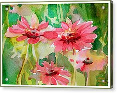 Spring Daisies In The Pink Acrylic Print by Mindy Newman