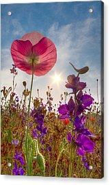 Spring   Acrylic Print by Debra and Dave Vanderlaan