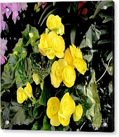 Acrylic Print featuring the photograph Spring Delight In Yellow by Luther Fine Art