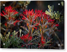 Spring Dew Paintbrush Acrylic Print by Eric Rundle