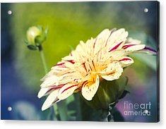 Spring Dream Jewel Tones Acrylic Print
