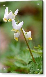 Spring Flower Acrylic Print by Tiffany Erdman