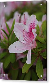 Acrylic Print featuring the photograph Spring Flower by Vadim Levin