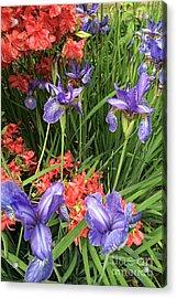 Spring Flowers 1 Acrylic Print
