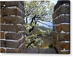 Spring Flowers At The Great Wall Acrylic Print