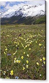 Spring Flowers By Monte Della Scindarella Acrylic Print by Bob Gibbons
