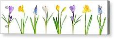 Spring Flowers  Acrylic Print by Elena Elisseeva