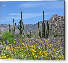 Spring Flowers In The Desert Acrylic Print by Elvira Butler