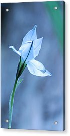 Spring Flowers Acrylic Print by Theresa Selley