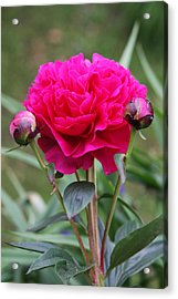 Acrylic Print featuring the photograph Spring Flowers by Vadim Levin