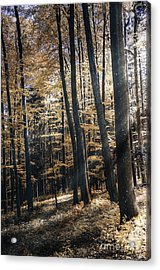 Acrylic Print featuring the photograph Spring Forest by Bruno Santoro