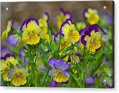 Spring Garden Acrylic Print by Marjorie Tietjen