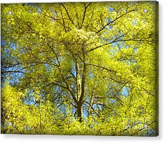 Spring Greening Acrylic Print by Lorraine Heath