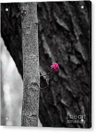 Spring Maple Growth Acrylic Print