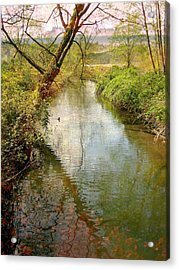 Spring Happening Acrylic Print by Shirley Sirois