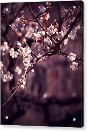 Spring Has Come Acrylic Print