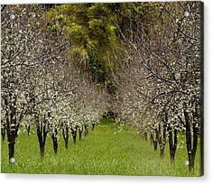 Spring Has Sprung Acrylic Print by Bill Gallagher