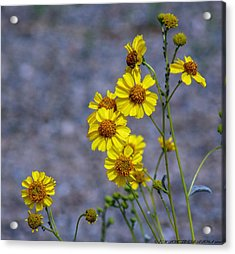 Acrylic Print featuring the photograph Spring Has Sprung by Elaine Malott