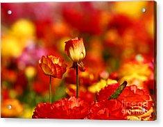 Carlsbad Spring Acrylic Print