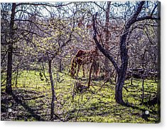 Spring Has Sprung Acrylic Print by Kelly Kitchens