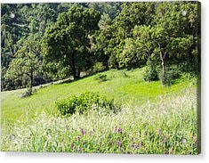 Acrylic Print featuring the photograph Spring Hike by Suzanne Luft