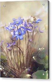 Spring... Acrylic Print