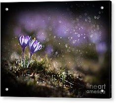 Spring Impression I Acrylic Print