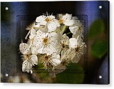 Spring In Bloom Acrylic Print