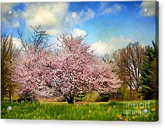 Spring In Kentucky Acrylic Print by Darren Fisher