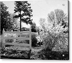 Spring In Martinsville Bw Acrylic Print by Angelia Hodges Clay
