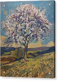 Spring In South Limburg Acrylic Print