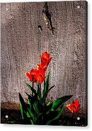 Spring In The City Acrylic Print