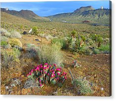 Spring In The Foothills Acrylic Print