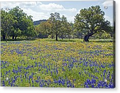 Spring In The Texas Hill Country Acrylic Print