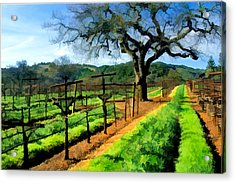 Spring In The Vineyard Acrylic Print by Elaine Plesser