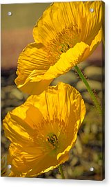 Spring In Yellow Acrylic Print by Rima Biswas