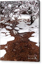 Acrylic Print featuring the photograph Spring Into Winter by Kerri Mortenson