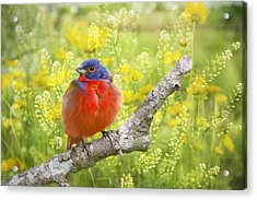 Spring Is A New Beginning Acrylic Print by Bonnie Barry