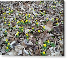 Acrylic Print featuring the photograph Spring Is Coming by Eric Switzer