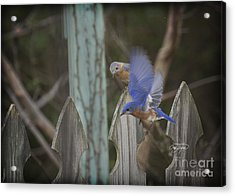 Spring Is Coming I Acrylic Print by Cris Hayes