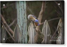 Spring Is Coming II Acrylic Print by Cris Hayes