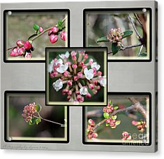 Spring Is Here - Gray Acrylic Print